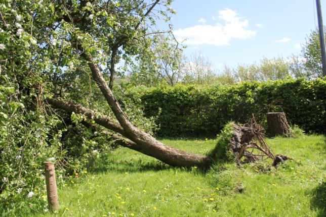 2015_05_10_3 bäume_2379